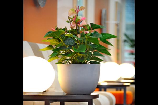piante-per-uffici2_capoverde
