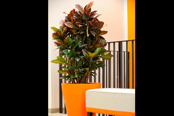 piante-per-uffici3_capoverde