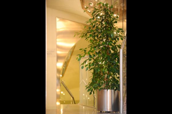 piante-per-uffici4_capoverde