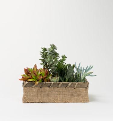 composizione piante succulente
