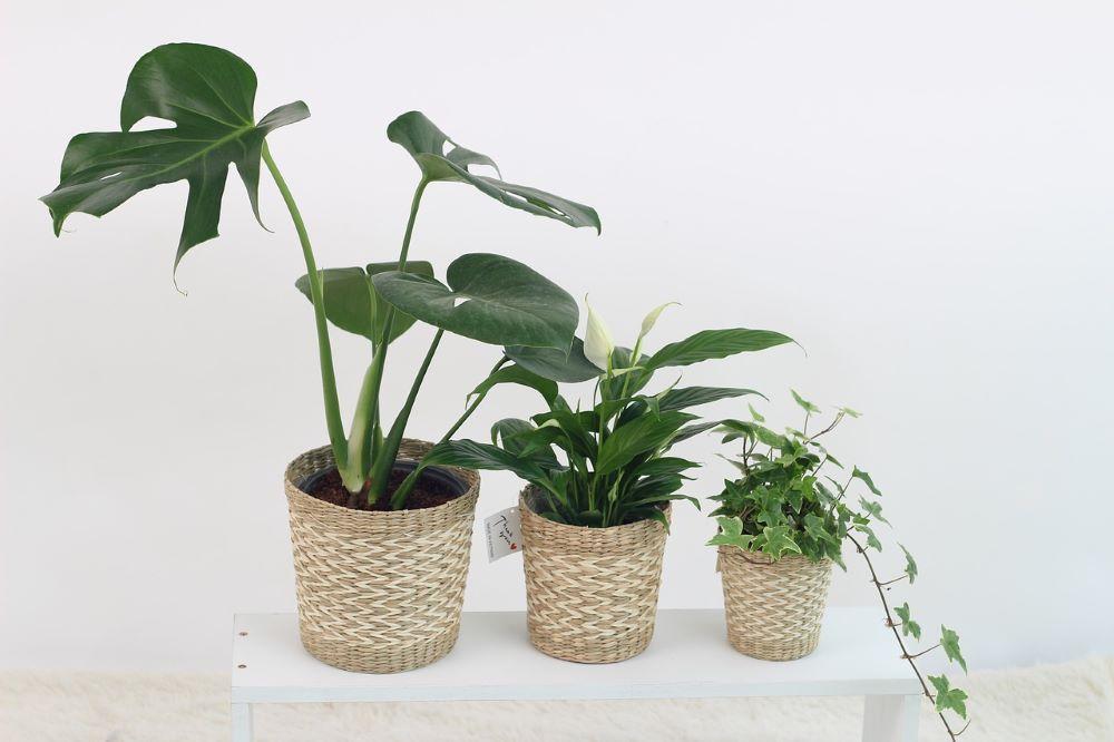concimare piante in vaso