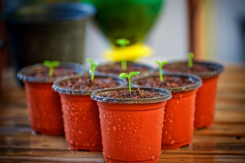 creare un orto in vaso