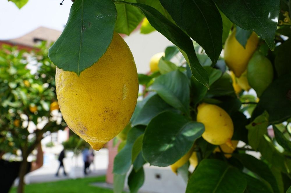 creare un frutteto in vaso
